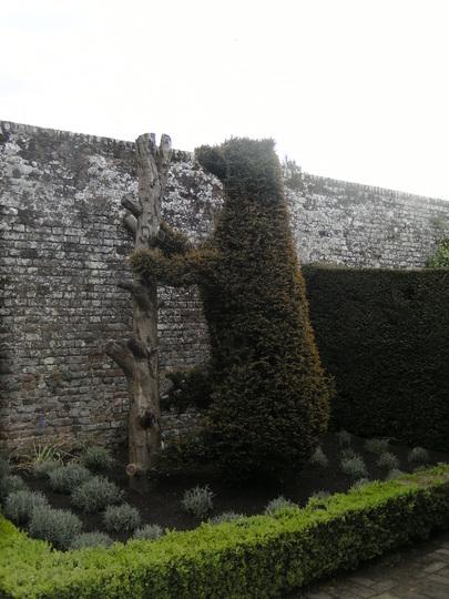Topiary Bear