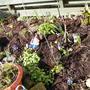 Compost 2008