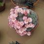 Cacti at Malvern
