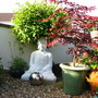 My big buddah,  (Salix x sepulcralis (Weeping willow))