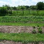 Veg plots - May