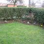 Dads front garden