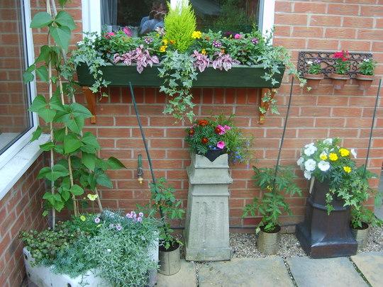 my pot garden