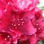 2009_05_11_goy026