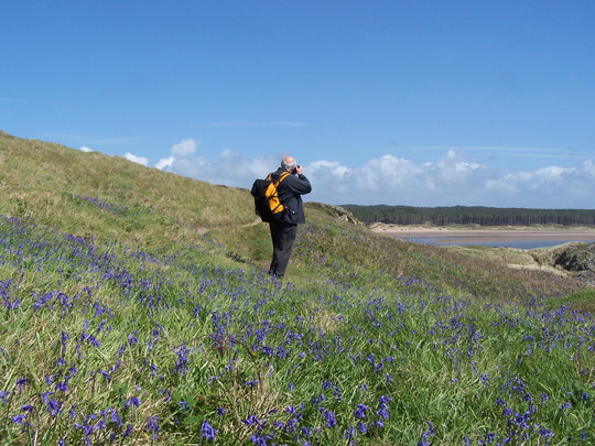 Blue Bells and some guy (bluebells)