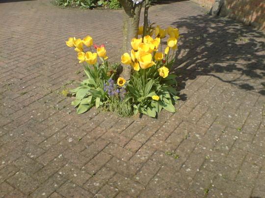 Why I love the springtime