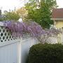 Springgarden2009_008