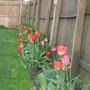 Springgarden2009_012