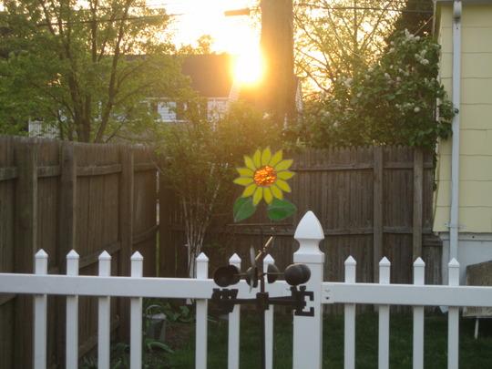 Sun Setting through Oak Tree