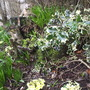 Bunnies_and_primroses1