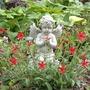 Clump of Fire Pink (Silene virginica)