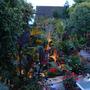 Garden_by_night