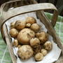 New_potatos_130509