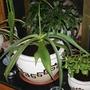 Livingroom_plants