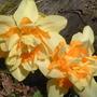 Taricq_march_13h_2008_no_5_014