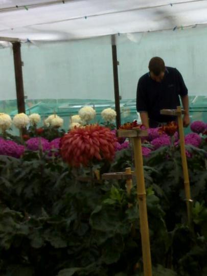 Darran in the flowering frame