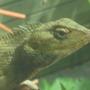 a closer look at the lizard