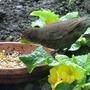 Birds_001