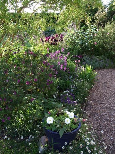 Down the garden room path.