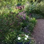 Down_the_garden_room_path
