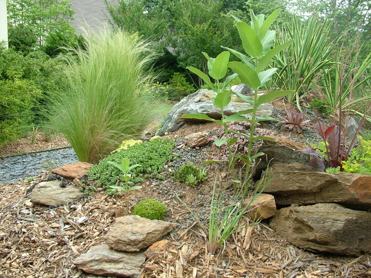 Mexican Feather grass (Stipa tenuissima (Feather grass))
