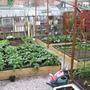 Gardeners_world_003