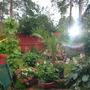 my garden last year..........