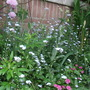Forget-me-nots, chives and sea thrift