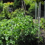 veggie patch 3