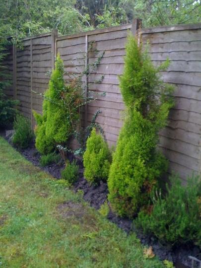 the back of garden
