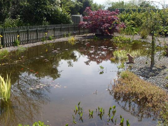 wildlife pond in garden centre