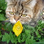 Poppy with her namesake! (Papaver Cambrica.......Welsh Alpine Poppy)