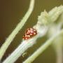 Ladybirds !