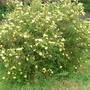 Our_garden_019