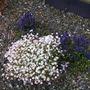 Our_garden_008