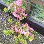 Our_garden_009