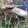 Alien in the ace of spades garden