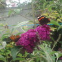 Garden_wildlife7_22.07.06