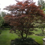 Acer at Groombridge Place