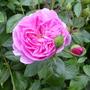 June_garden_00075