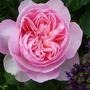 June_garden_00071