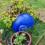 Our_garden_014