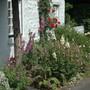 The front garden last summer