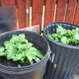 our new veg garden