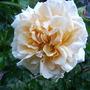 June_garden_00069