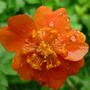 After the rain: geum