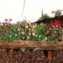 Garden_23_05_09_002