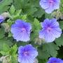 June_garden_00099