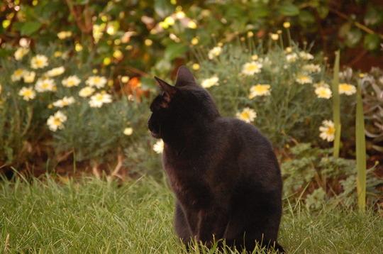 Millie & Argyranthemum  'Sole Mio'