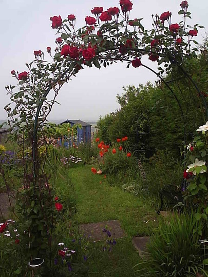 rose archway to my garden